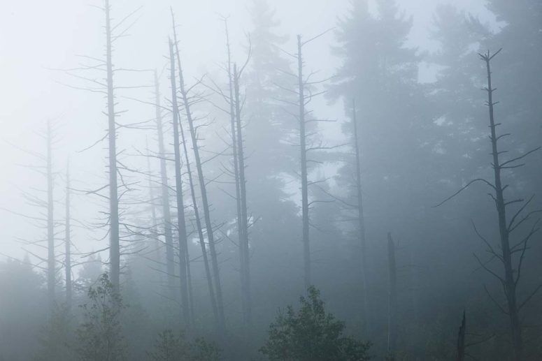Warm Fog