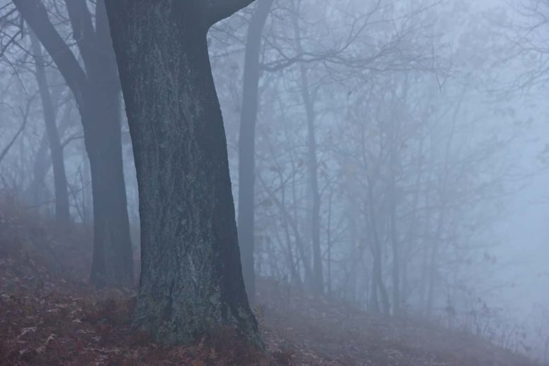 Winter Silence , Hudson Valley