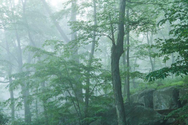 Zen Trees, Hudson Valley